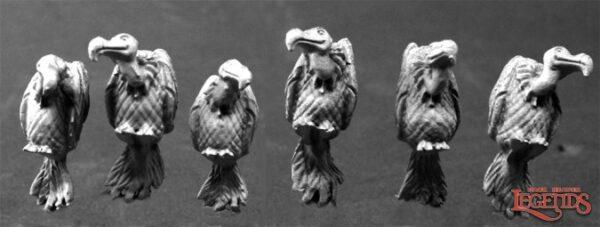Vultures (6) 03797 Aasgieren